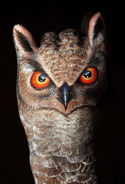 Owl Hand Painting Photo