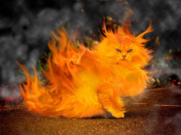 Animation Cat Photoshop Photo
