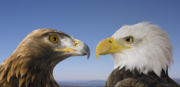 Animation Eagles Photoshop Photo