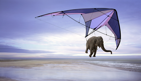 Animation Flying Elephant Photoshop Photo