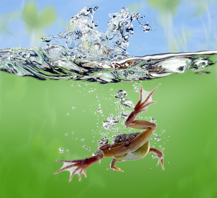 Animation Frog Photosop Photo