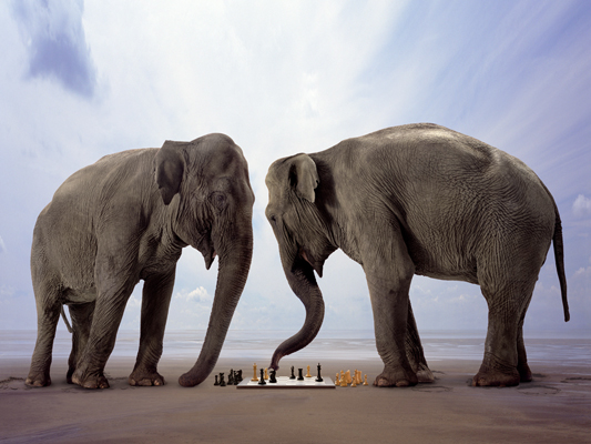 Animation Playing Chess Elephants Photoshop Photo
