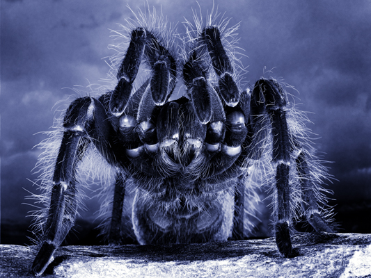 Animation Spider Photoshop Photo