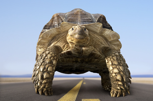 Animation Turtle Photoshop Photo